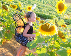 Photograph of fairy in Sun Flowers in Port Dover on the Gold Coast, South Coast of Ontario, Norfolk County on Lake Erie